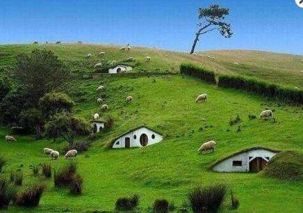 新西兰农业招聘